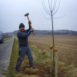 baumpflanzung-koehlinen18